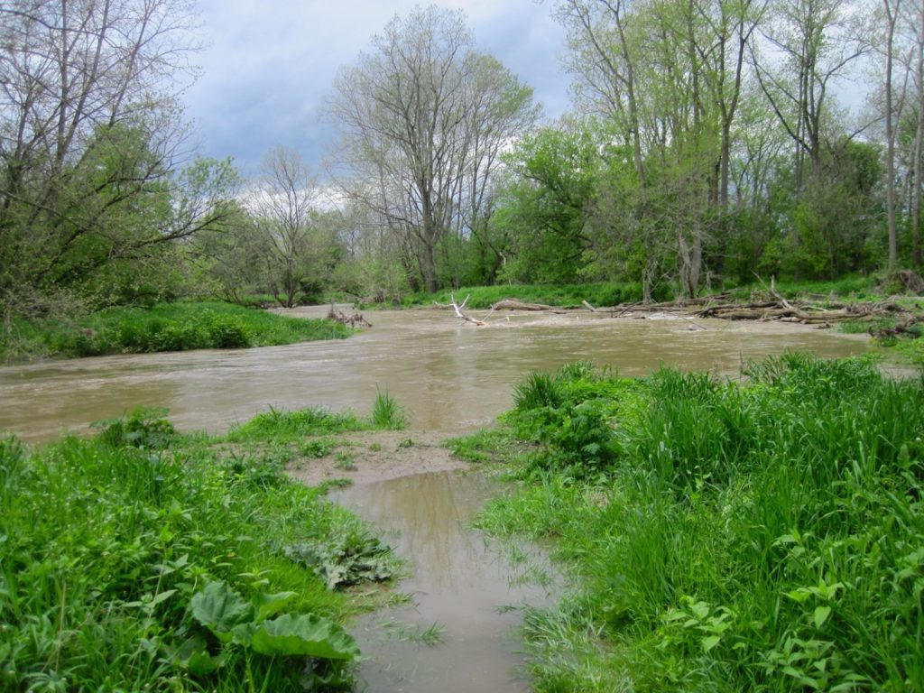 Apple Creek flooding after heavy rain storm.