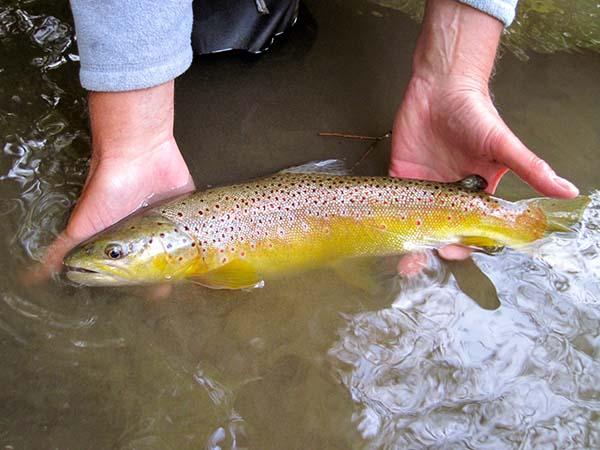 Clear Fork River – CFRTU